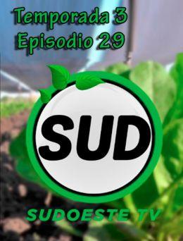STV | T :3 | E :29